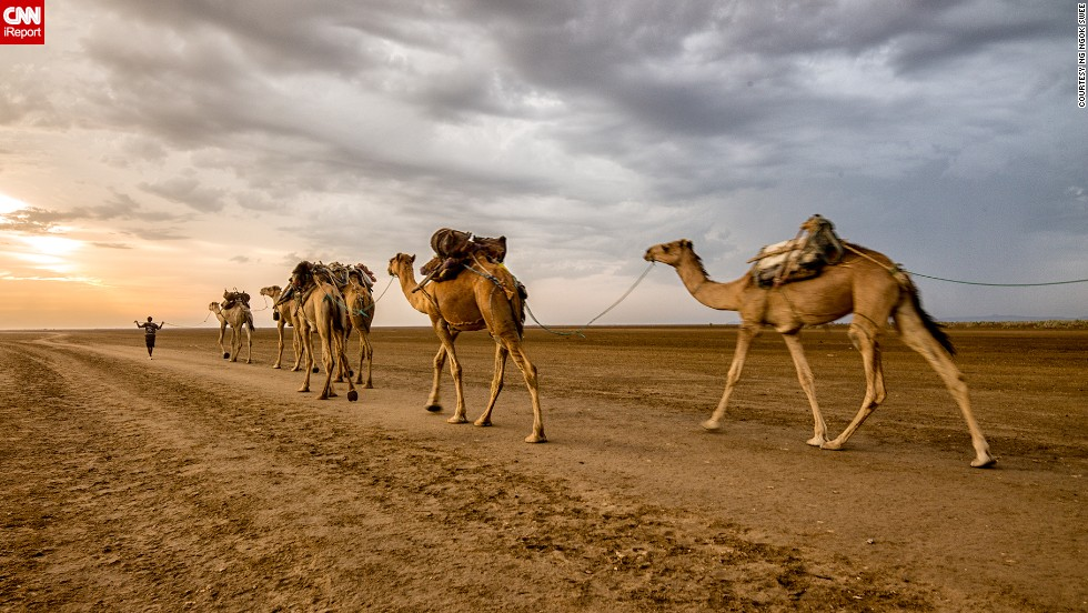 A salt worker and his camels cross the Danakil Depression in Northern Ethiopia. The landscape is one of harshest on earth, with wastelands of salt and sweltering temperatures that remain well over 100 degrees Fahrenheit.