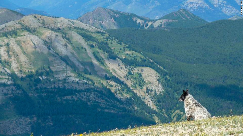 Montana's Bob Marshall Wilderness Complex is home to grizzly bears, mountain goats and maximum peoplelessness.