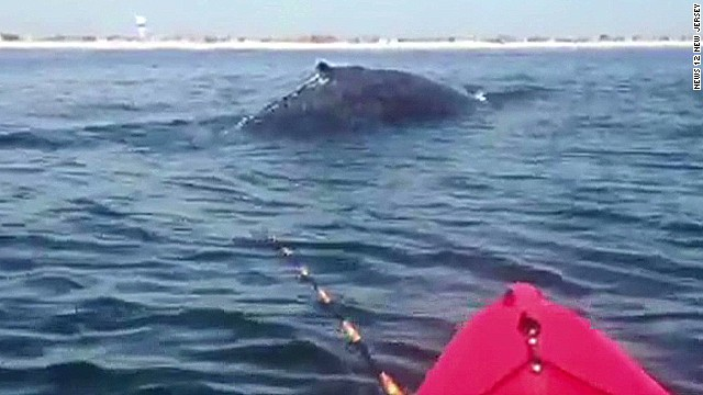Humpback splashes feet from kayakers
