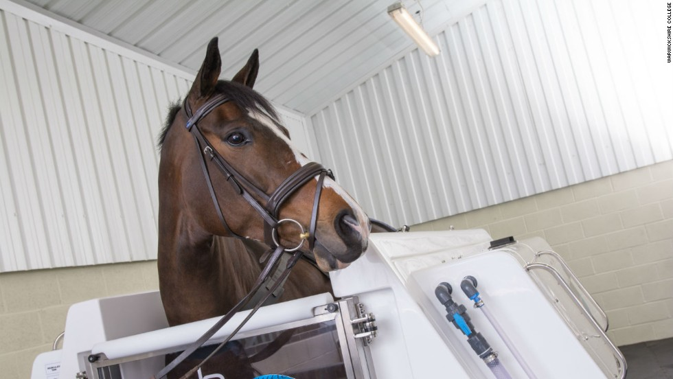 "These facilities are part of Warwickshire College's equine therapy center. If your horse doesn't take to the treadmill, there is also an ""equine hydrotherapy spa"" available."