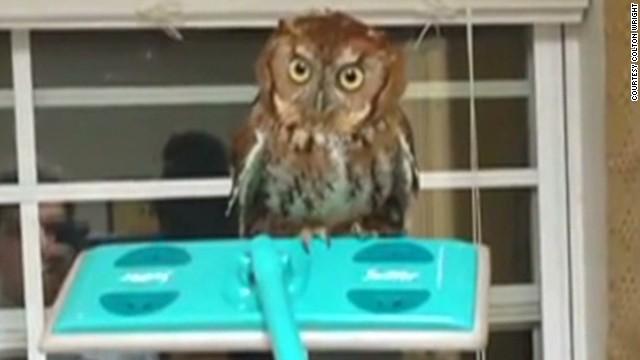 ac ridiculist owl whisperer _00012928.jpg