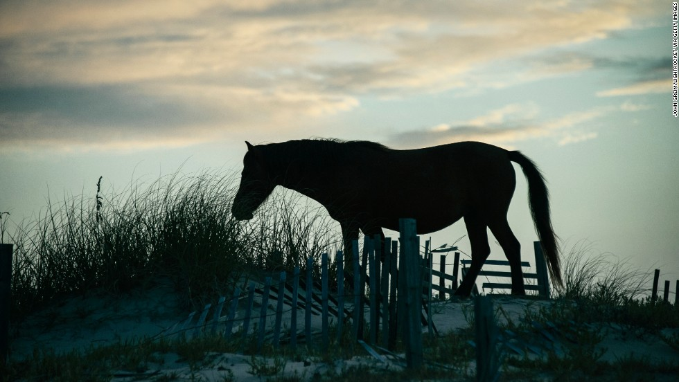 Wild horses are among the creatures you're likely to spot along the shore near Carova Beach in North Carolina's Outer Banks.