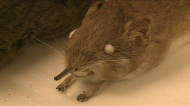 dnt new mammal unveiled _00000803.jpg