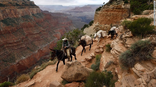 GRAND CANYON, AZ - JUNE 09:  National Park Service (NPS) employee Bill Dabney leads a pack of mules loaded with tools and supplies on June 9, 2009 into in Grand Canyon, Arizona. The NPS Tuesday launched its largest trail reconstruction project in the Grand Canyon since the 1960's, using federal stimulus funds given by Congress to help jump-start the U.S. economy. The Grand Canyon park received $10.8 million as part of the stimulus and began using it Tuesday to rehabilitate the scenic South Kaibab trail. As part of the project 28 trail crew employees are avoiding furlough because of the fresh funds. National parks around the country are using the money to fund deferred maintenance as well as begin fresh development projects.  (Photo by John Moore/Getty Images) *** Local Caption *** Bill Dabney