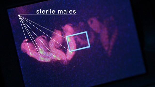 spc make create innovate genetic modification_00021128.jpg