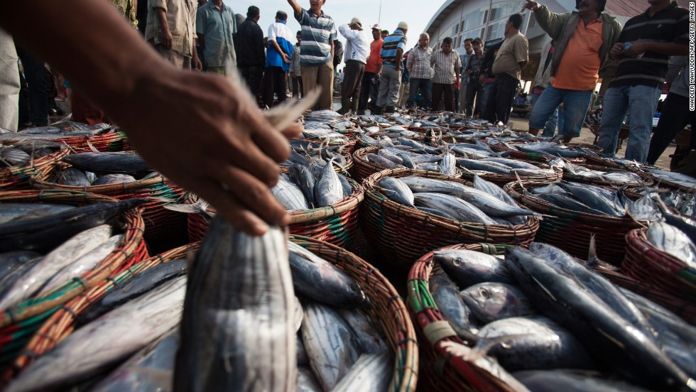 An estimated 250 million people in developing countries directly depend on small-scale fisheries for food and income. In this photograph fish are sold at market in Banda Aceh.