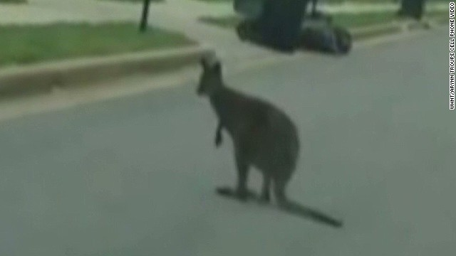 whnt pet wallaby loose alabama neighborhood_00003407.jpg