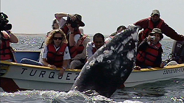 cnnee rodriguez baja calif whales and tourism_00004006.jpg