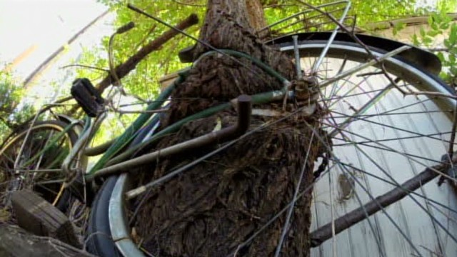 tree through bicycle_00010122.jpg