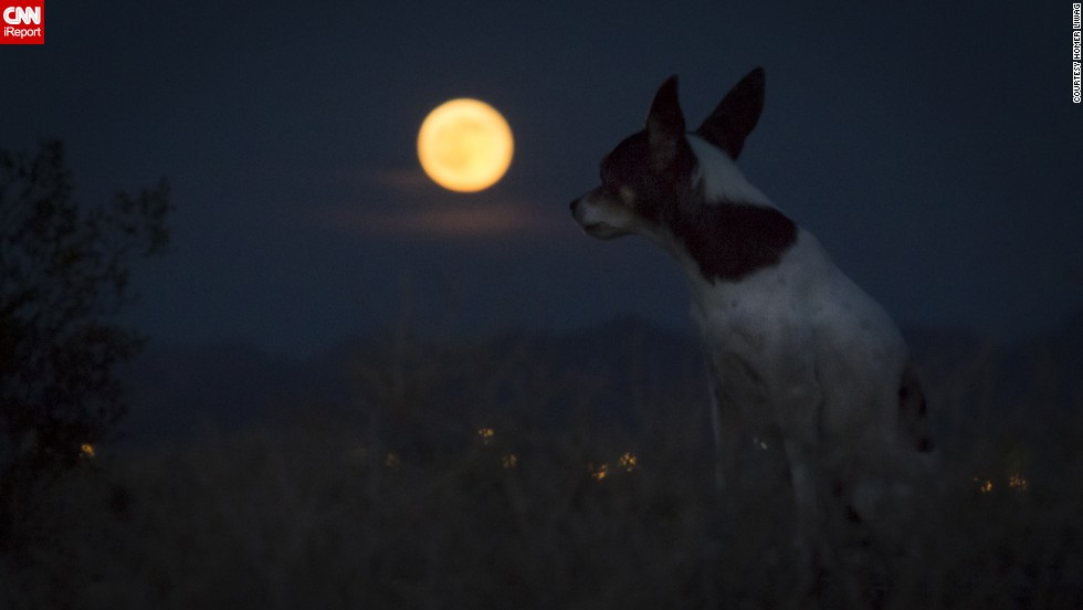 "<a href=""http://ireport.cnn.com/docs/DOC-1152178"">Homer Liwag</a> and his dog Sake sat in the desert in Las Vegas waiting for the supermoon. ""This supermoon was striking as usual and snuck up behind the dense clouds,"" he said."