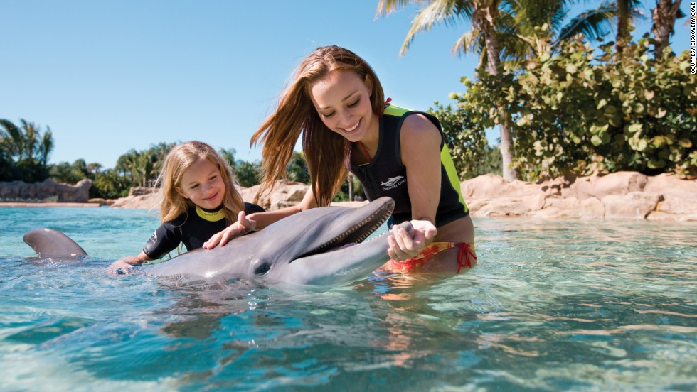 Visitors to Orlando, Florida's Discovery Cove, named world's best amusement park by TripAdvisor, encounter dolphins, snorkel with tropical fish and get soaked on an array of rides.