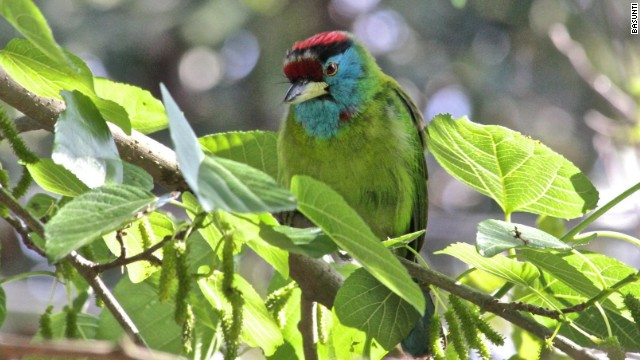 The Kangra Valley has more than 420 species of birds.