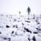 arctic surfing 9 stones