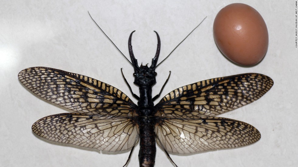 The specimens are now at the Insect Museum of West China.
