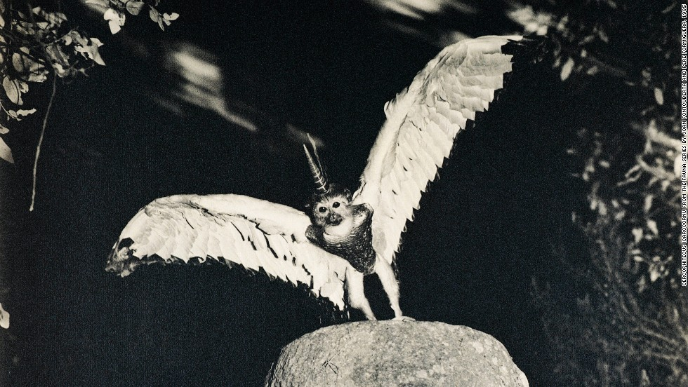 Winged goats, monkeys with unicorn horns and squirrels with snake tails - Joan Fontcuberta's imagination has stunned audiences and deceived experts. Here, a monkey with wings and a unicorn's horn, supposedly found in an archive belonging to the fictional Dr Peter Ameisenhaufen.