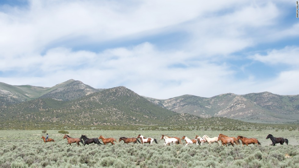 "In the <a href=""http://www.nps.gov/grba/planyourvisit/the-great-basin.htm"" target=""_blank"">Great Basin</a> of the United States, it's estimated that 40,000 mustangs still roam free."