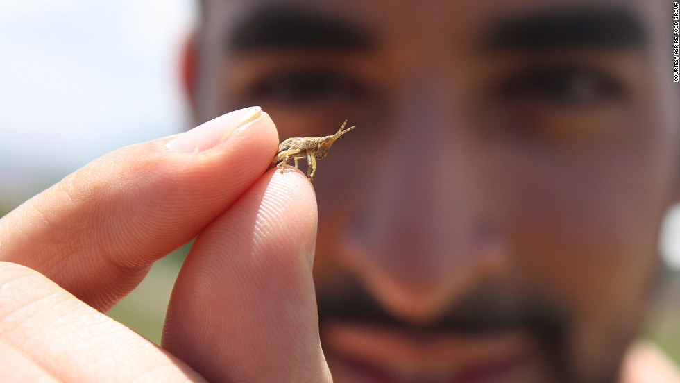 Mohammed Ashour (pictured) launched Aspire with four fellow MBA students at McGill University. The idea? To give people more access to edible insects. The concept's not as strange as you might think. Two billion worldwide already eat insects.
