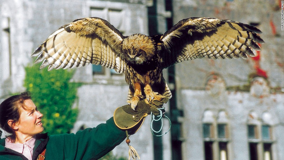 Not Harry Potter's Hedwig the romantic, but Dingle, Ashford Castle's resident owl, who can fly to your beloved with an engagement ring around his neck.