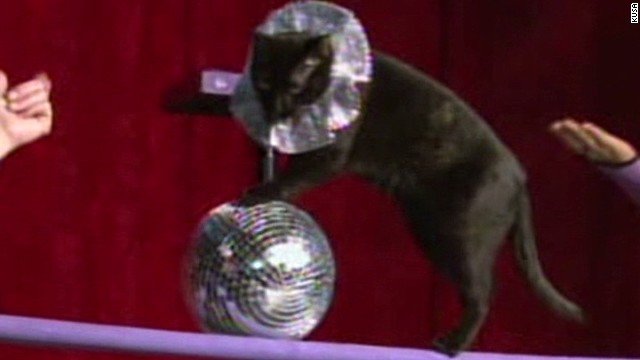 Circus has gone to the dogs, uh, cats!