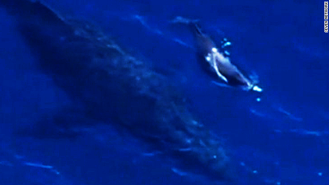 Watch newborn whale swim with mom