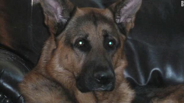 dnt ma police dog poisoned_00002913.jpg