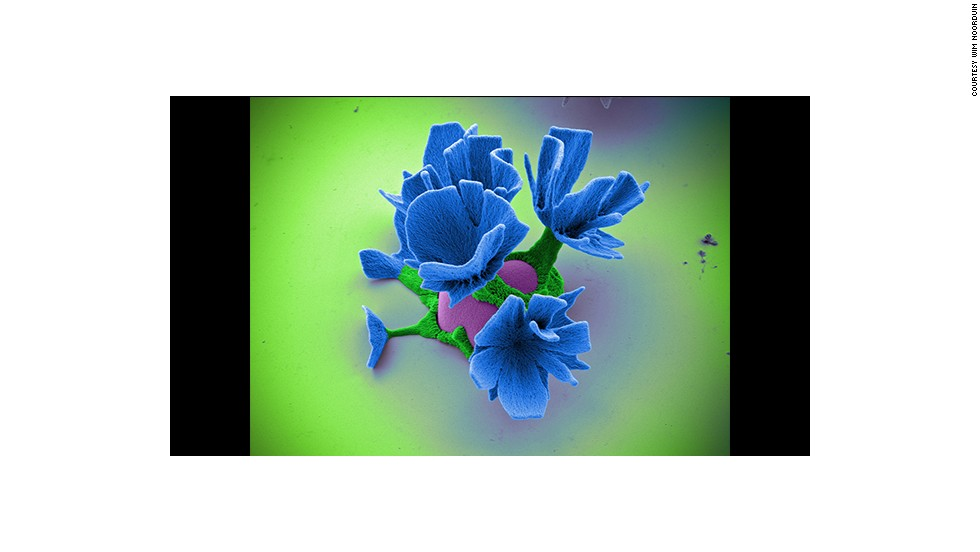 """This """"flower"""" is the product of a chemical reaction and is the diameter of a single human hair."""