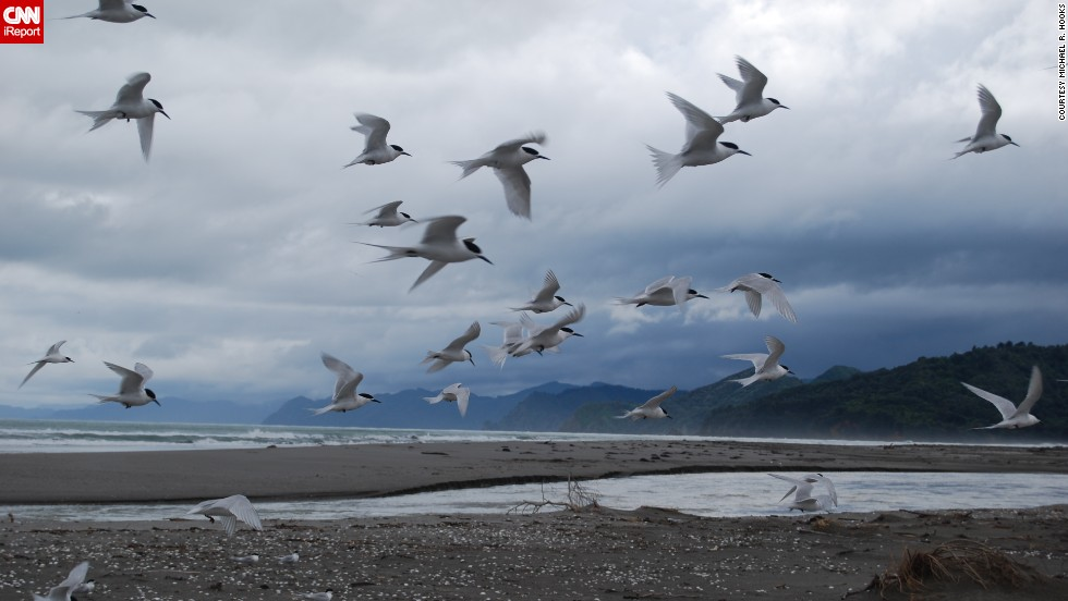 "A <a href=""http://ireport.cnn.com/docs/DOC-1155195"">flock of white-fronted terns</a> come in for a landing on a stormy afternoon in Opotiki, New Zealand."