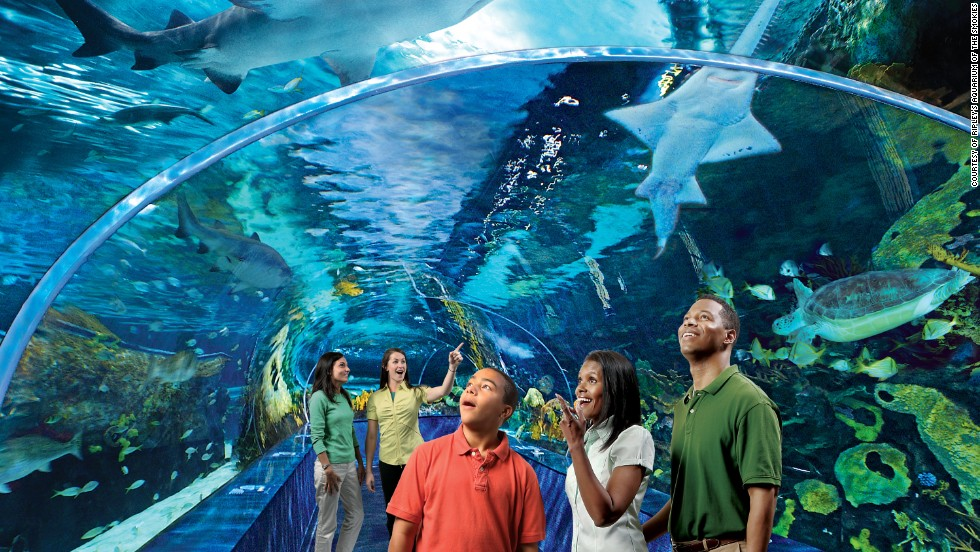 6 Facts About Aquariums Everyone Thinks Are True