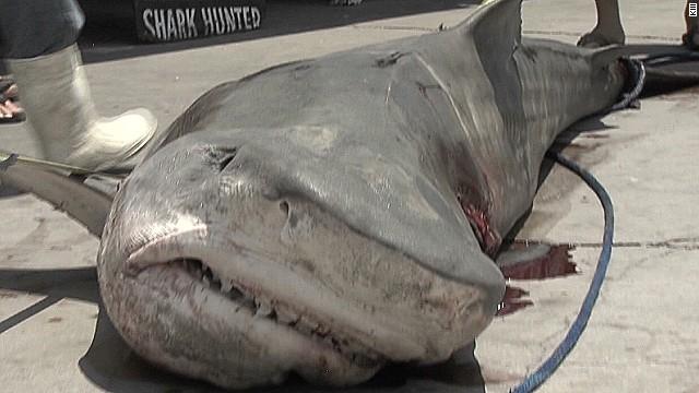 pkg fisherman shark texas 8 hours drags boat_00000229.jpg
