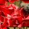 03 poppies 0805