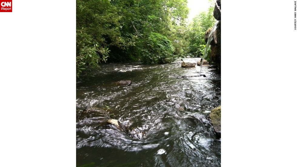 "Mary Wallace worries about the well-being of <a href=""http://ireport.cnn.com/docs/DOC-1158861"">Town Brook</a>, a 1.5-mile stream in Plymouth, Massachusetts. When dams were built in the 1790s, the number of migrating fish decreased, according to <a href=""http://www.greateratlantic.fisheries.noaa.gov/mediacenter/2014/noaatownbrook.pdf"" target=""_blank"">NOAA</a>. ""Town Brook is a great story of a waterway gone bad and restored to its original state,"" she said. ""Industry dammed the water and prevented fish from entering Billington Sea. Now with the removal of dams, fish are returning and thriving."""