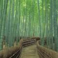 1. Sagano Bamboo Forest