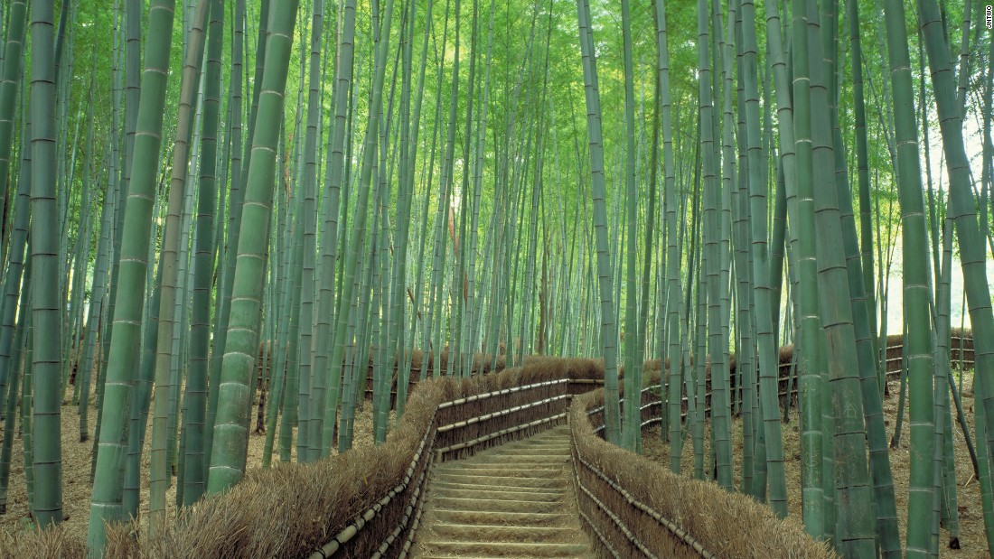 Kyoto's Sagano Bamboo Forest is considered one of the world's most beautiful forests. Not hard to see why.