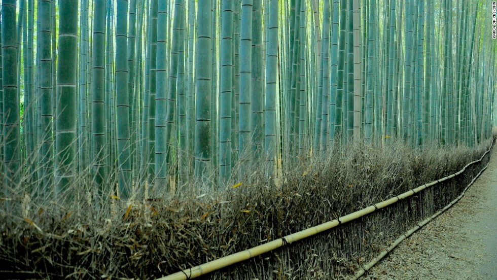 The railings and fences through the Sagano Bamboo Forest are made of dried bamboo stalks and leaves that have already fallen from the plants.