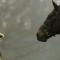 equestrian etiquette princess anne