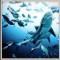 michael muller shark 2