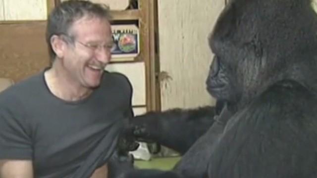 erin moos robin williams gorilla koko_00014327.jpg