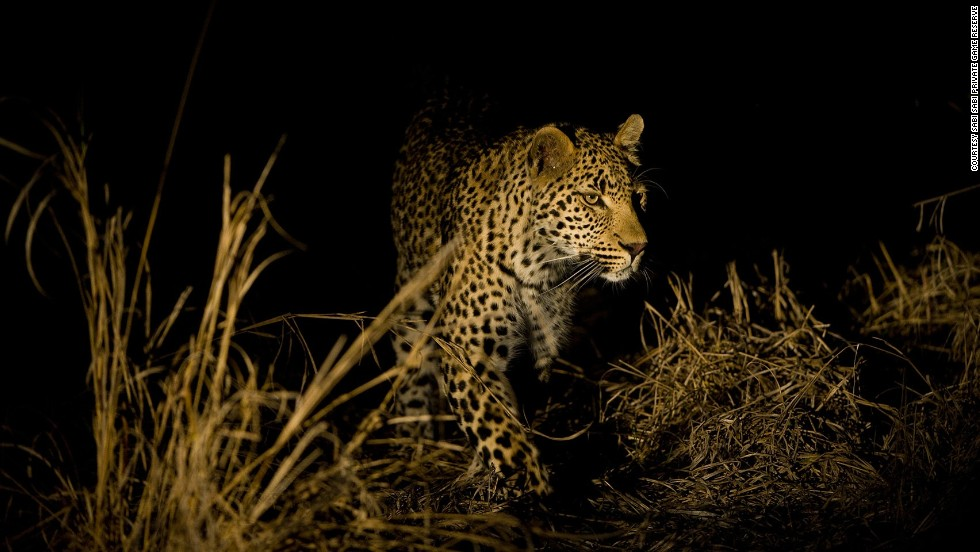 South Africa's night game drives offer the chance to experience wildlife viewing in a unique way.