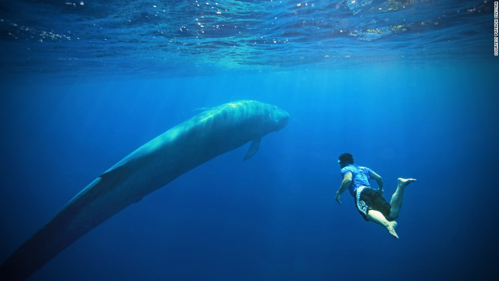 <strong>Blue whale trip (Sri Lanka)</strong>: During this eight-night trip, you'll have a chance to swim with, photograph or simply watch the heaviest animals that ever lived.