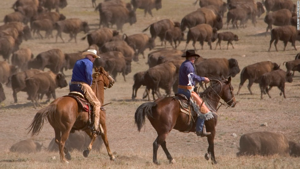 <strong>Buffalo round up (South Dakota)</strong>: This ground-shaking spectacle takes place in September in Custer State Park, home to the world's largest publicly owned bison herd (there are 1,300 of the beasts). If you want to take part, there are 20 riding places open to the general public.