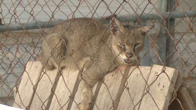 Gaza's zoo animals caught in crossfire