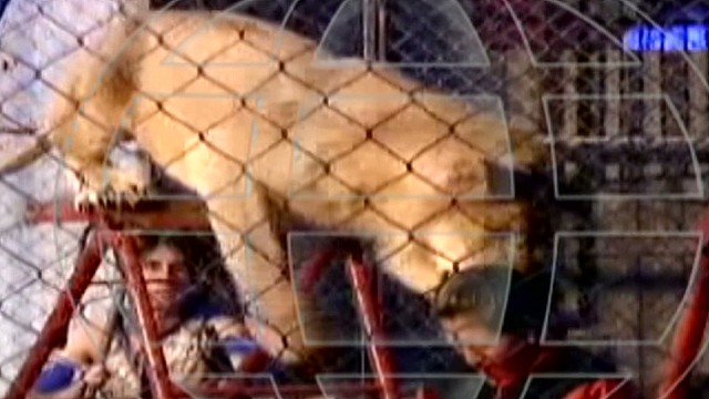 cnnee cafe umana circus lion attack _00001312.jpg