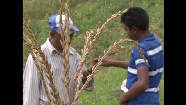 cnnee nm honduras agriculture pkg _00004225.jpg