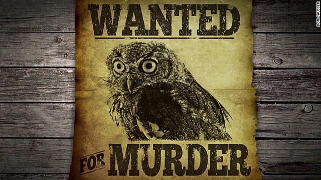 erin pkg moos owl murders canary_00000320.jpg