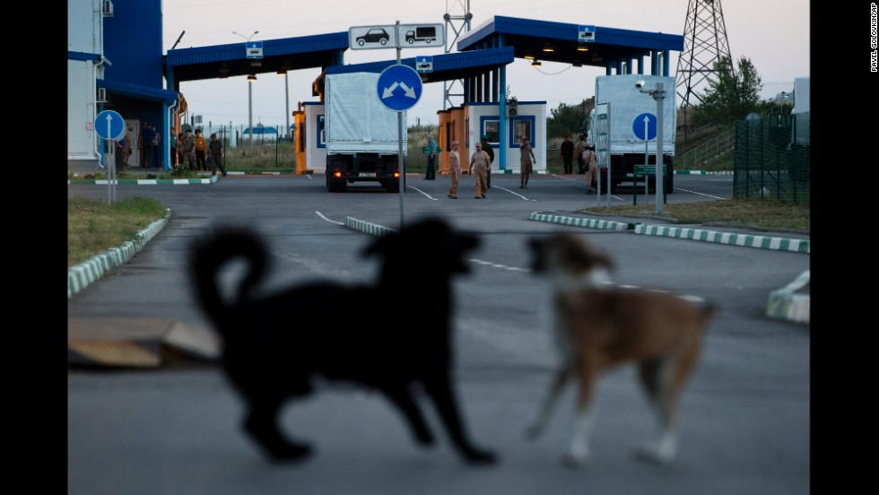 Dogs play together as a Russian convoy carrying aid supplies stops at a border control point with Ukraine on August 20.