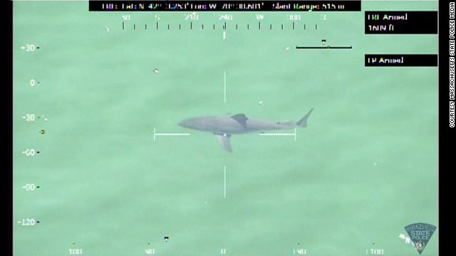 A 12-14 foot great white shark was spotted off the coast of Duxbury, Massachusetts. State Police temporarily closed the beach to swimmers.