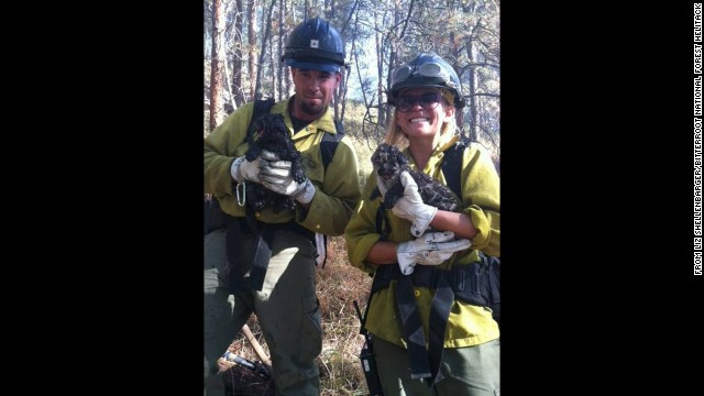 Jared Chandler and Sara Steele cuddle two mountain lions cubs saved from the fire. They were found under a burning log.