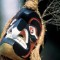 Heli-sport Nuxalk Mask Dancer