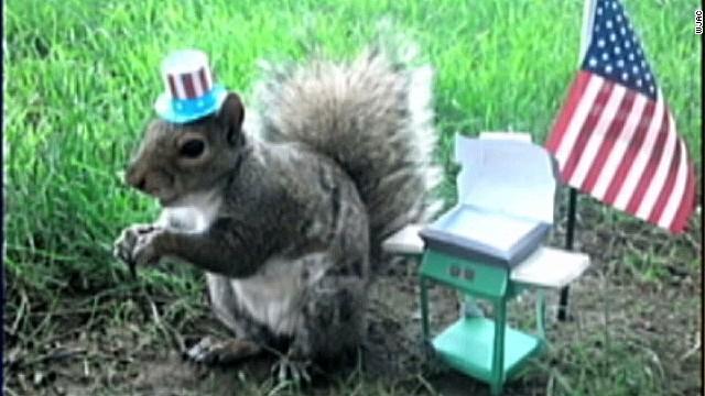 pkg squirrel whisperer_00004917.jpg