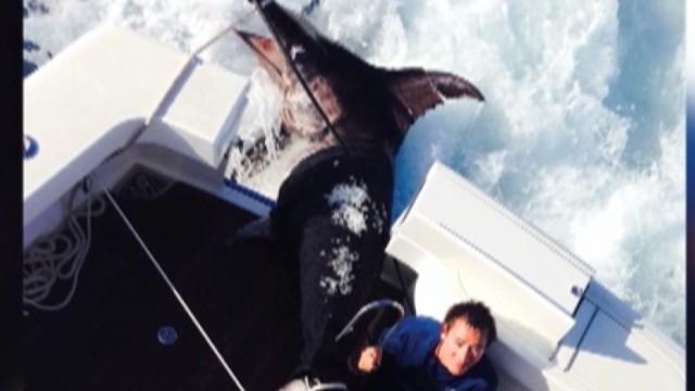 dnt 700 pound swordfish caught _00004025.jpg